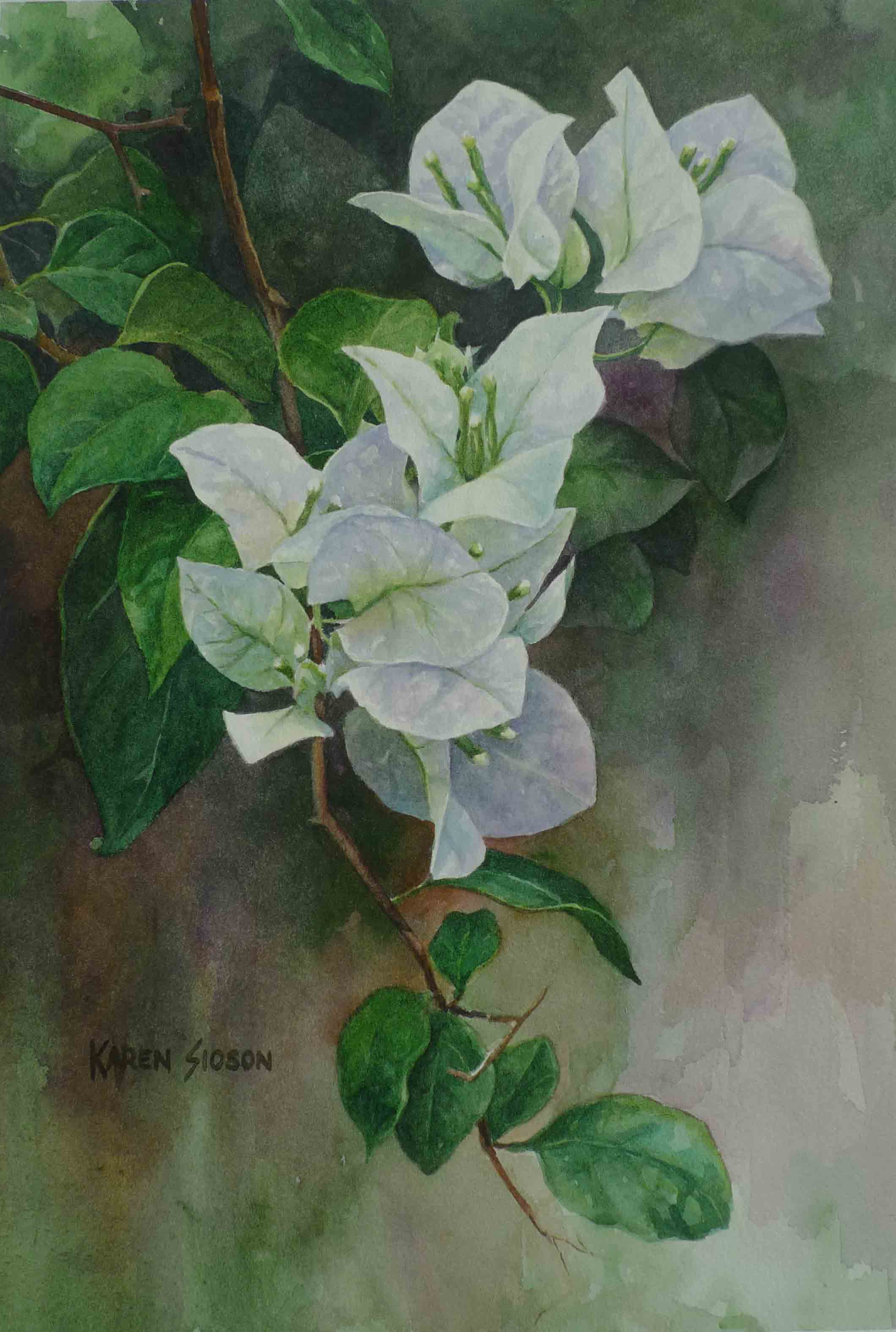 karen-sioson_white-bougainvillea
