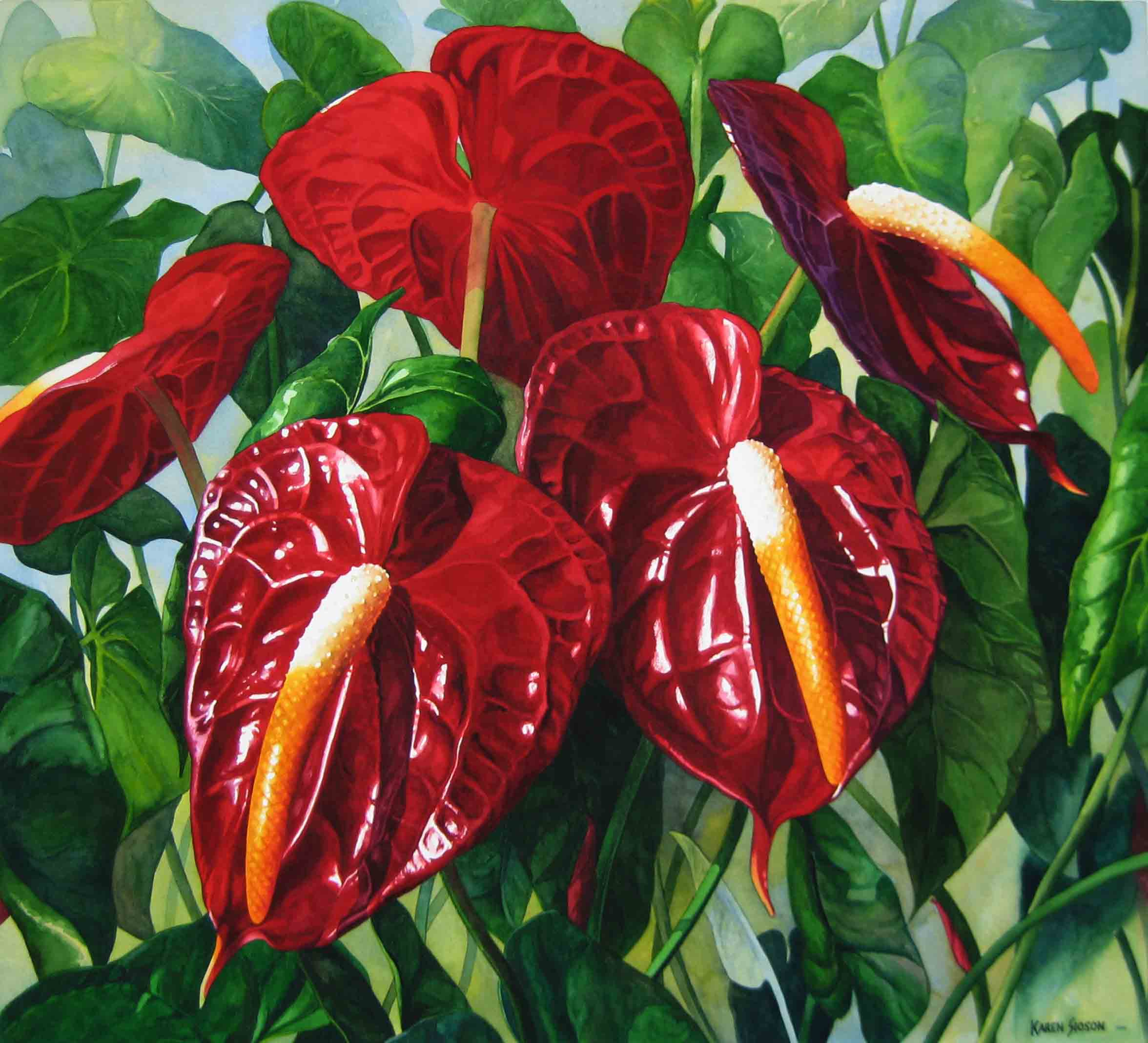 karensioson_red_anthuriums