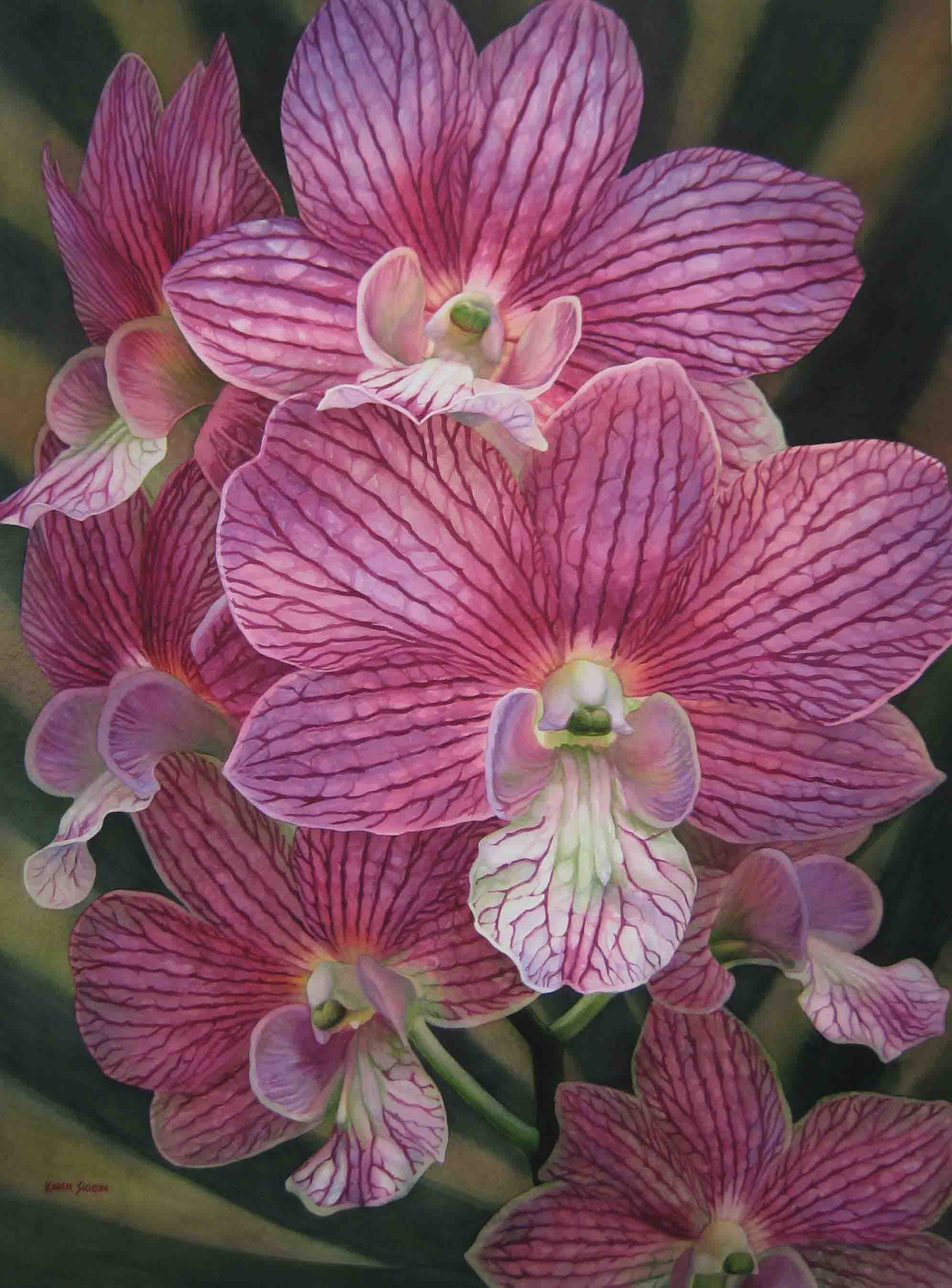 karensioson_striped_pink_orchids