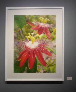 Karen Sioson_Crimson Waltz_framed