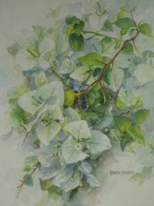 watercolor painting of a white bougainvillea